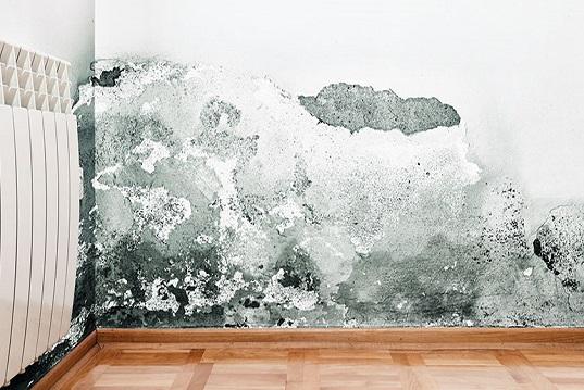 Muffa ed umidità in casa, possibili soluzioni