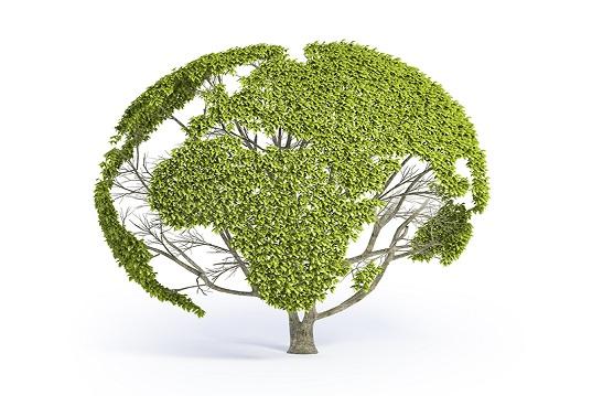 Bioedilizia, nasce Ecocittà